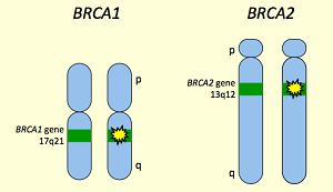 онкогены BRCA1 и BRCA2