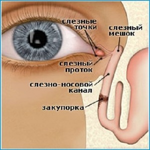 структура слезных протоков