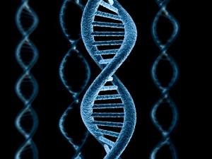 ген человека